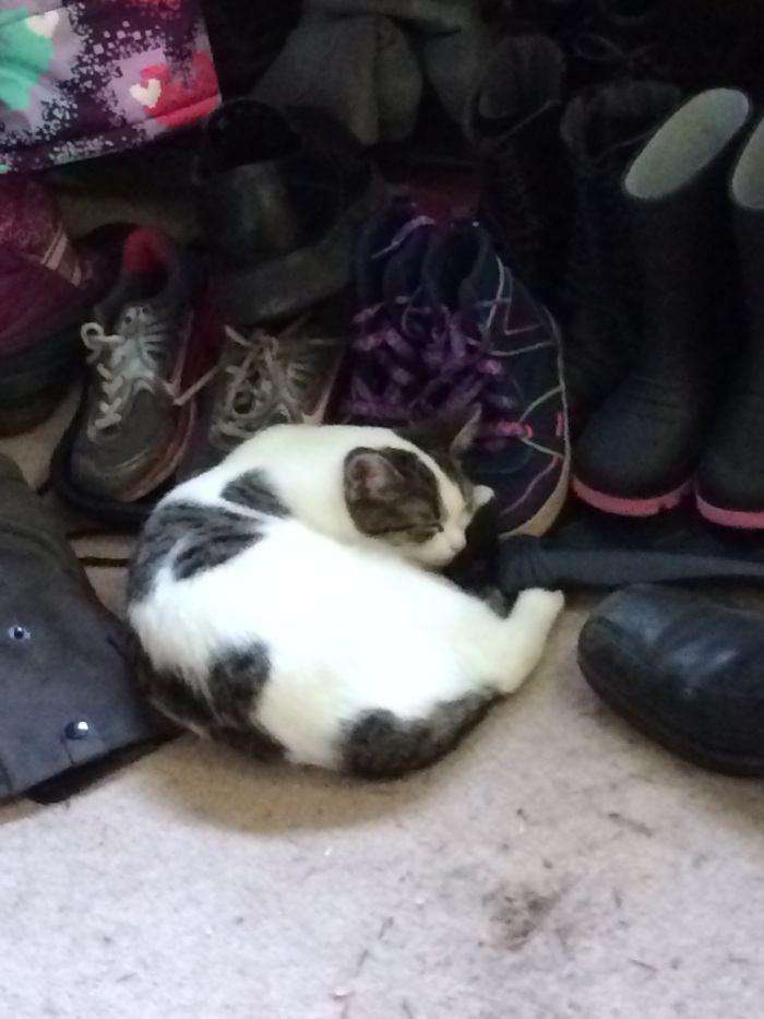 the shoe pile is one of this little ones places to nap